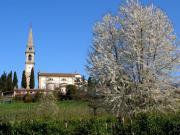 montebullona11_300